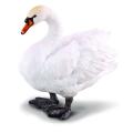 Лебедь ,М